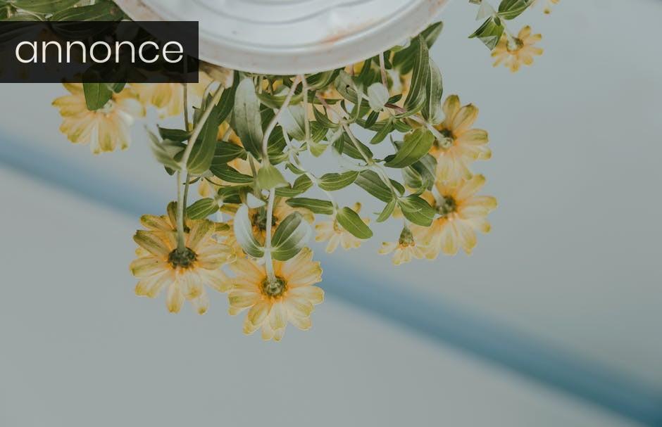 Pynt også det nymalede hus med skønne plantekasser